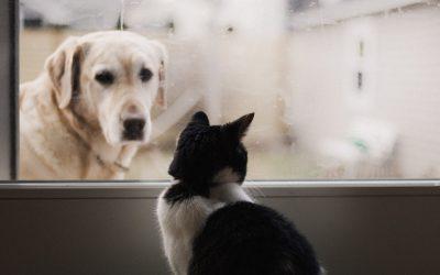 Dlaczego powinniśmy sterylizować psy i koty?